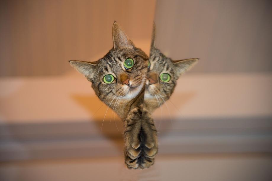 cat-697113
